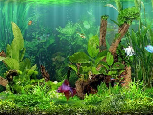 Dream Aquarium Screensaver 1.2413